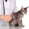 Ветеринарные клиники в Деманске